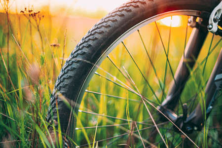 Bicycle Wheel In The Summer Green Grass Meadow Field Banque d'images