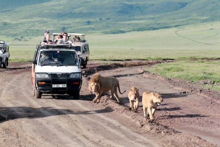 TANZANIA, NGORONGORO CONSERVATION AREA - FEBRUARY 13: Tourists watching the jeep family of lions, February 13, 2008.