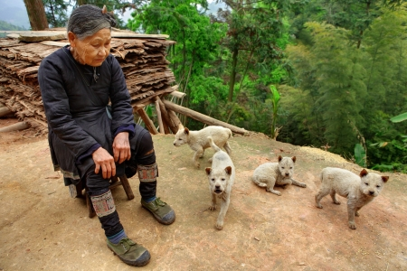 mutts: GUIZHOU PROVINCE; CHINA - APRIL 10:An elderly Chinese woman in green gym shoes, sitting in front of his home surrounded by dirty, beige puppies , April 10, 2010. Basha Miao Ethnic minority Village. Editorial