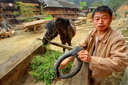 armful: Zengchong village, Guizhou, China - April 12, 2010: Rural Chinese peasant farmer holds a equine collar, his horse eats an armful of fresh clover lying on the cart, April 12, 2010. Zengchong dong ethnic minority village, Guizhou province, southwest China,