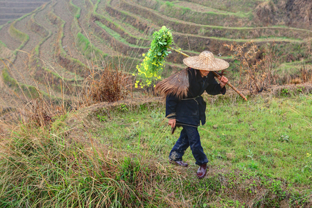 Yao Village Dazhai, Longsheng, Guangxi Province, China - April 3, 2010: Farmland in the countryside of southwestern China, the rice terraces of rice fields, a peasant farmer villager walking on cultivated land. Dragon backbone rice terraces. Stock Photo - 25386132