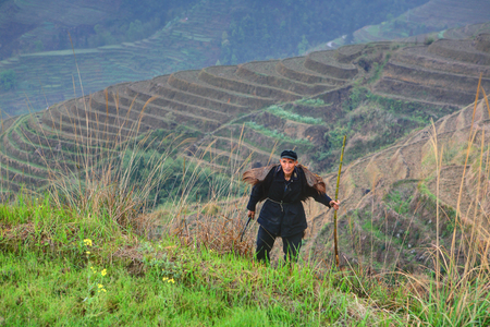 Yao Village Dazhai, Longsheng, Guangxi Province, China - April 3, 2010: One unidentified man Asian, peasant farmer shepherd, in rural areas of China mountain, amid farmland, rice terraces on the hillsides. Only editorial use. Stock Photo - 25386135