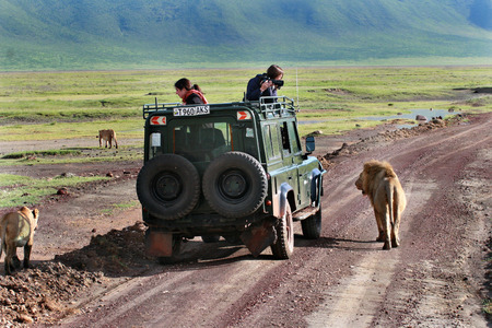TANZANIA, NGORONGORO CONSERVATION AREA - FEBRUARY 13, 2008  Tourists from utility vehicle, photographed wild lions in wildlife on a jeep safari  Tourists photograph wild lions, looking out of the hatch jeep  Travelers photograph wild lions, looking out of Reklamní fotografie - 26600931