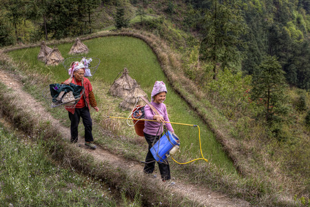 yoke: Langde Village, Guizhou, China - April 15, 2010: Two Asian women peasants, farmers go for agricultural work is carried on the shoulders of the yoke with the equipment for spraying plants. Editorial