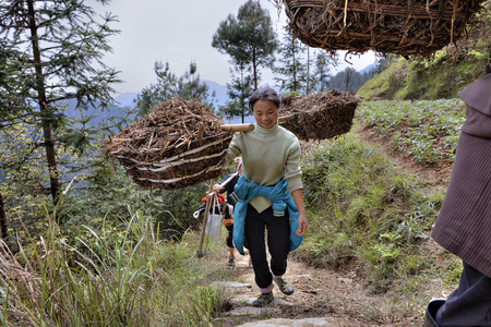 agriculturalist: Langde Village, Guizhou, China - April 15, 2010: Young woman farmer carries the load on a yoke in the mountainous region of rural China. Editorial