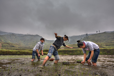 agriculturalist: Xijiang miao village, Guizhou Province, China - april 18, 2010: Three Asian teen girl busy planting rice in paddy field, peasant children go through the mud at a farmers field. Editorial