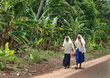 mohammedan: Zanzibar, Tanzania - February 18, 2008: Two muslim schoolgirls wearing hijab, walking along the side of the road past the banana plantations and eating ice cream on a stick.