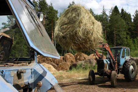 peasant farming: Lemozero, Olonets, Karelia, Russia - July 26, 2006: Forklift truck loading round hay bales on a trailer. Editorial