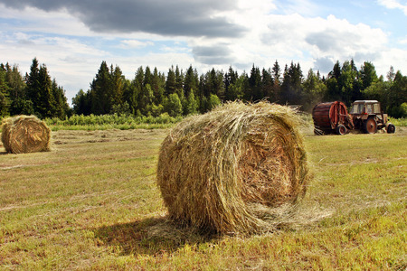 haymow: Lemozero, Olonets, Karelia, Russia - July 26, 2006: Modern russian agriculture, hay round bales are assembled by tractors.
