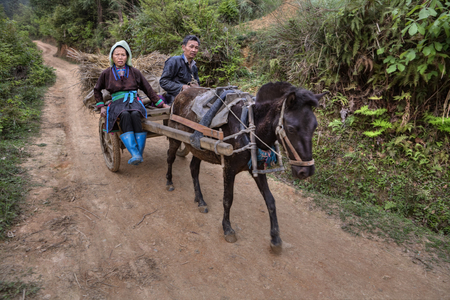field work: Zengchong Dong Village, Guizhou Province, China - April 11, 2010: Chinese farmers, a man and a woman returning from field work in a cart pulled by a horse, a mountain dirt road.