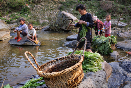 edible leaves: Zengchong Dong Village, Guizhou, China - April 11, 2010:  Asian woman washes, cleans and cuts  leaves of edible plants, standing in water of  river village, surrounded by a group of young children.