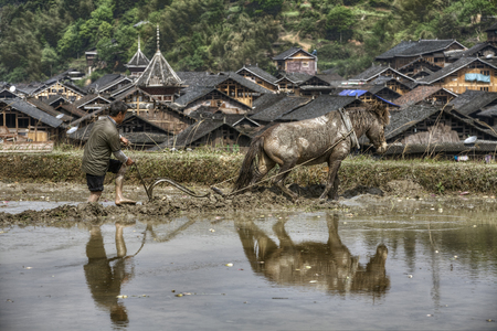 infield: Zhaoxing Dong Village, Guizhou Province, China -  April 8, 2010: Agricultural land, the farmer cultivates ground, using the horse that pulls plow to flooded rice field.