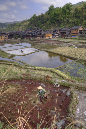 agriculturalist: Zhaoxing Dong Village, Guizhou Province, China -  April 8, 2010: Farmers working in the rice fields during morning hours, in spring time near the ethnic minorities village.