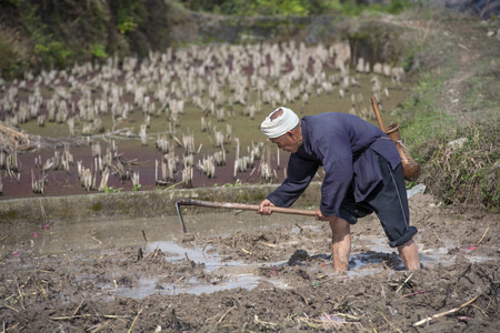 cultivated land: Zhaoxing Dong Village, Guizhou Province, China -  April 8, 2010: Cultivated land, Asian peasant tills the soil in flooded paddy field with water using a hand hack, spring morning.