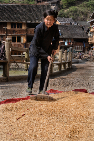 agriculturalist: Zhaoxing Dong Village, Guizhou Province, China -  April 9, 2010: An elderly Chinese woman dries the grain in the sun, outdoors, in the middle of a rural street.