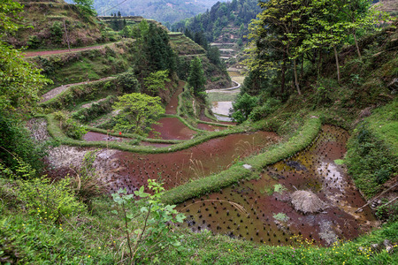 Rice terraces in the mountains of southwestern China, flooded rice fields near Jilun Dong Village, Guizhou Province, cloudy spring day.