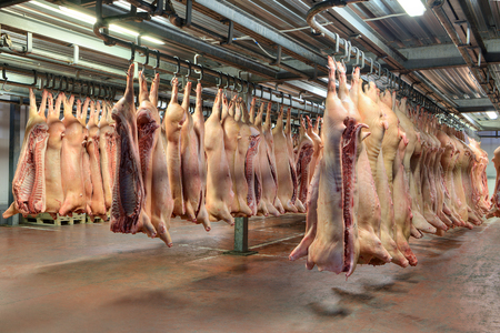 A lot of frozen pig carcasses hanging in the hook cold store.