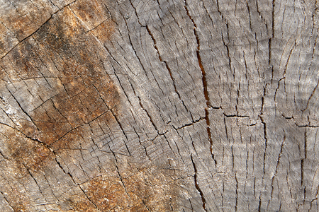 Structure and small cracks on a cut log, texture for backdrop.