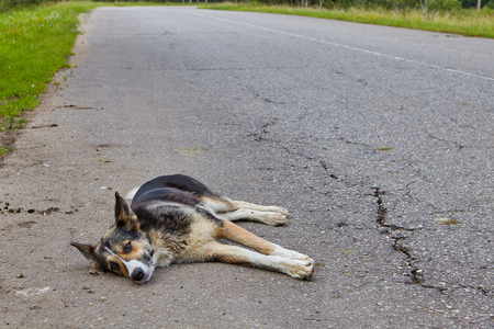 A non-pedigree dog rests on the roadway of an asphalt road in the countryside.
