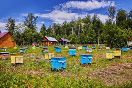 Farm of beekeeper, many colorful wooden beehives in agricultural areas, sunny summer day.