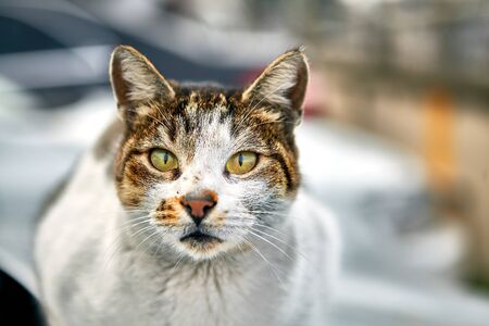 Stray animal in winter Istanbul, a dirty scratched homeless cat is resting on the street, selective focus. Stok Fotoğraf