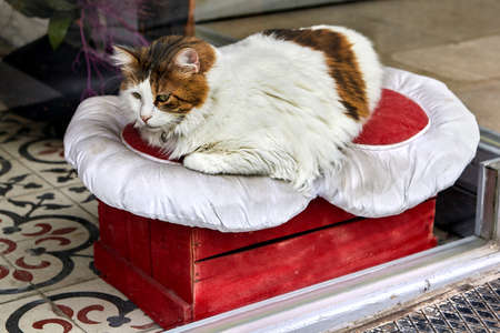 Stray cat bed provided by department store.