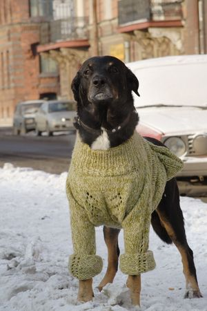 tranquillity: Dog in human cloth, cool winter Stock Photo