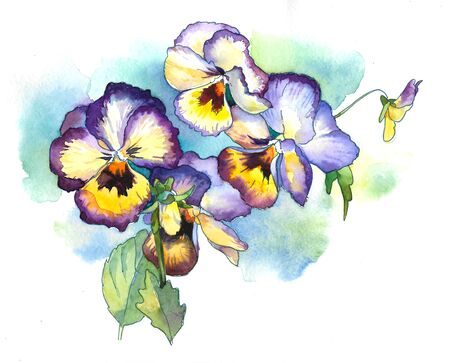 watercolor violets on a blue background Stock Photo