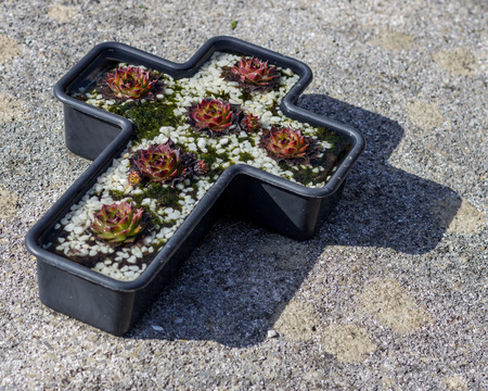 A cross shaped planter sits on the ground and contains succulent plants and white rocks 写真素材
