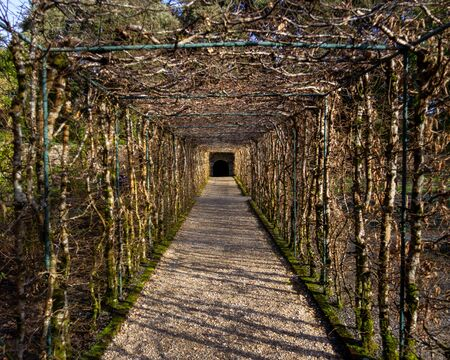 Winter view of an arbor forming a long tunnel found on the grounds of the Ashford Castle gardens Фото со стока