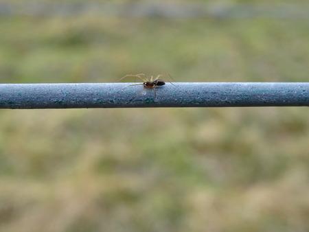 arachnids: Spider on a Fence Stock Photo