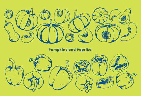 illustration of pumpkin and paprika