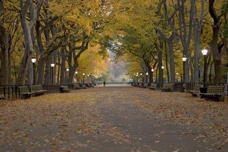 Literary Walk in autumn_1 版權商用圖片