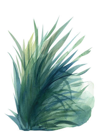grass on a white background, watercolor illustration, colorful bird. High quality photo