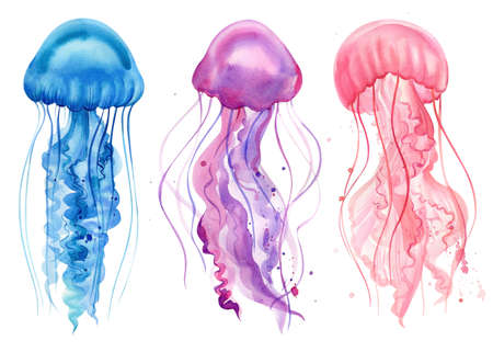 Blue, purple, pink jellyfish. Watercolor drawings on a white background. Ocean animals. High quality illustration