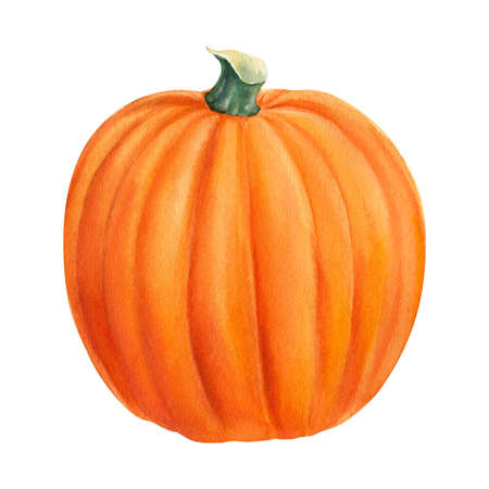 Halloween orange ripe pumpkin on isolated white background, watercolor illustration, hand drawing