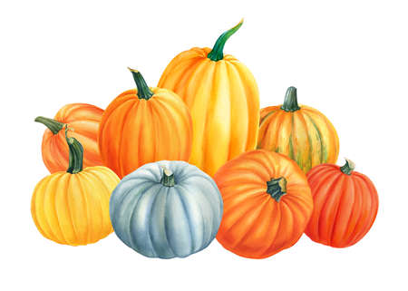 composition of pumpkins on isolated white background, watercolor illustration, hand drawing, poster