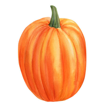 pumpkin isolated white background, watercolor illustration, hand drawing