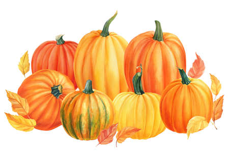composition of pumpkins on isolated white background, watercolor illustration, hand drawing