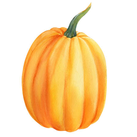 Autumn ripe orange pumpkin on isolated white background, watercolor illustration, hand drawing