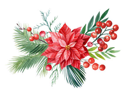 Christmas composition, holly leaves and berries, spruce branches, watercolor illustration