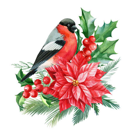 Red flower, holly, bullfinch , branches on a white background. Christmas composition, watercolor illustration