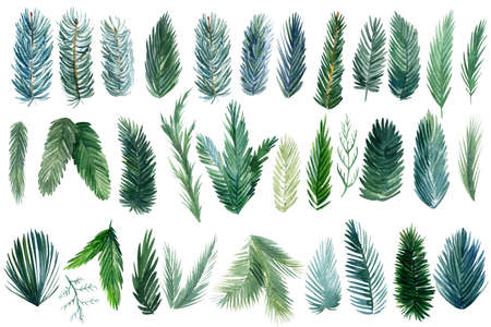 Set of green spruce branches on white background, watercolor botanical illustration