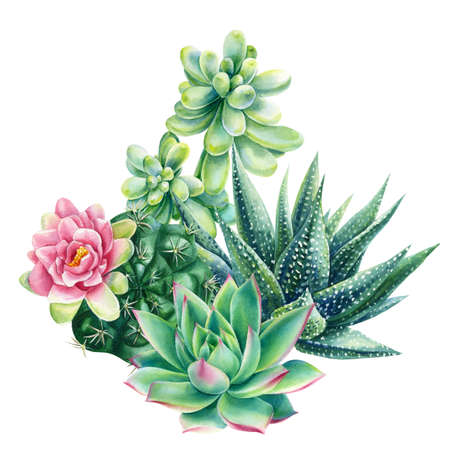 Watercolor vintage succulents bouquet, haworthia, echeveria, cactus, botanical painting, card with green plants