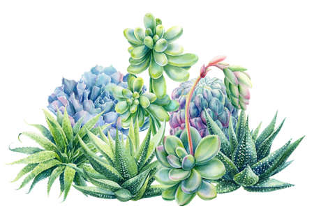 Composition of succulents haworthia, aloe, echeveria, cactus, watercolor botanical painting, card with green plants