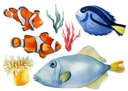 Fish, algae, and sea anemones on an isolated white background, watercolor illustration Foto de archivo
