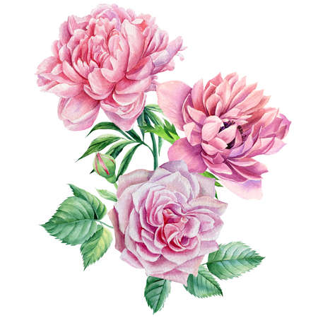 Summer flowers. Bouquet Pink roses and peonies. Watercolor botanical illustrations.