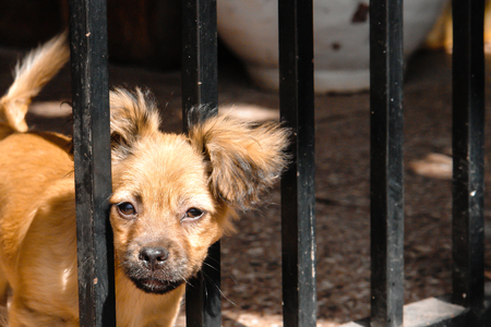locked: Puppy locked Stock Photo