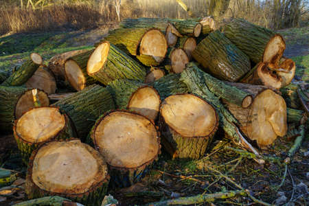 wood cut: Cut wood in the forest