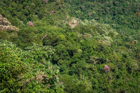unexplored: Jungle scenery in south america